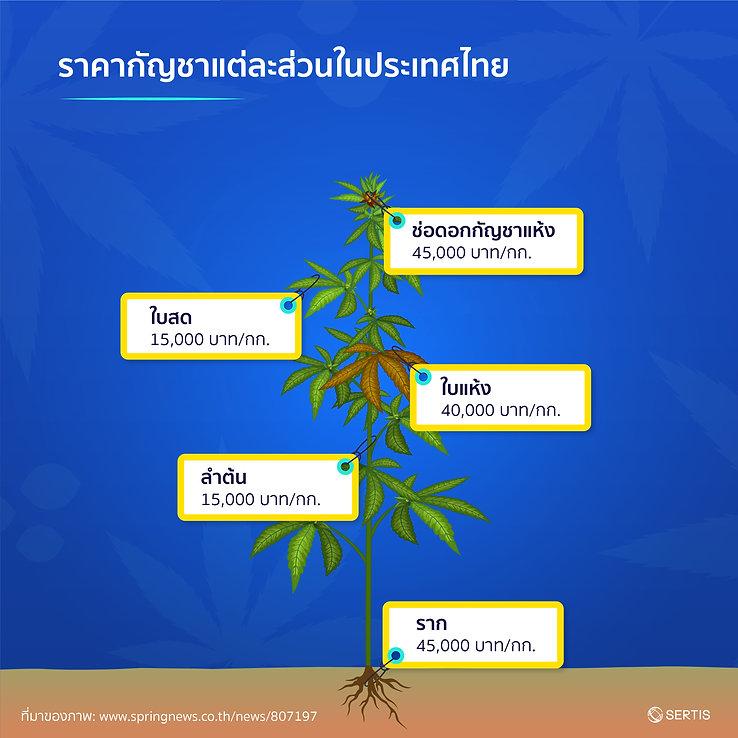 Cannabis-CreativeJUN_Sertis-06.jpg