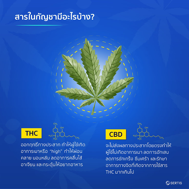Cannabis-CreativeJUN_Sertis-03.jpg