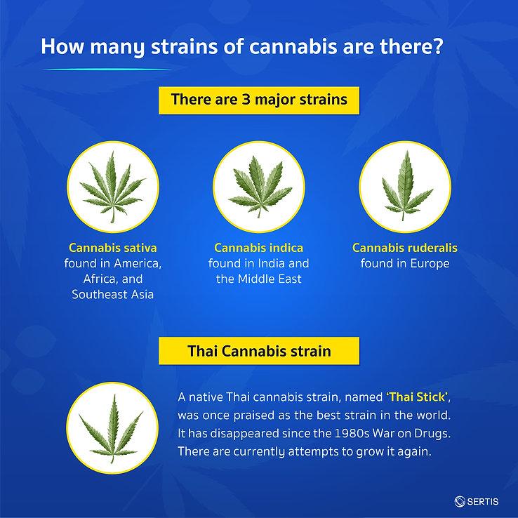 Cannabis-CreativeJUN_Sertis_EN-02.jpg