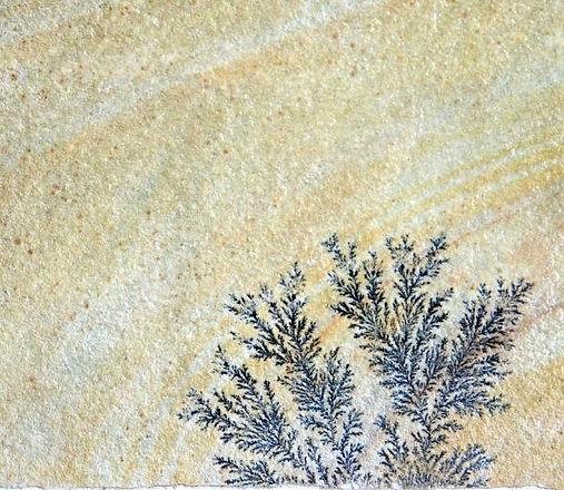 Fossil 4.jpg