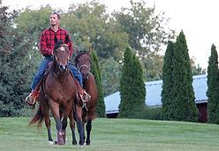 cowboy cuts tree service