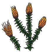 chuqui-plant.jpg