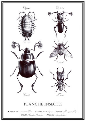 """Planche """"Insectes""""  A3"""