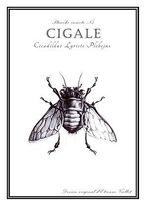 Cigale A5