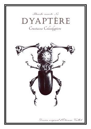 Dyaptère A5