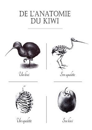 De l'anatomie du Kiwi A3