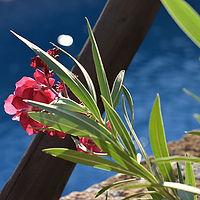 vignette-fleurs-et-piscine.jpg