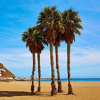 palmiers-san-jose-playa-jour4.jpg