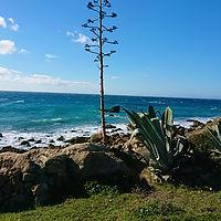 palmier-tarifa.jpg