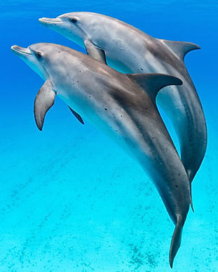 2-participants-version-dauphins.jpg