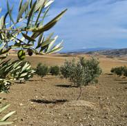 Dans le lointain, la Sierra Nevada