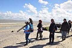 Voir les phoques en Baie de Somme