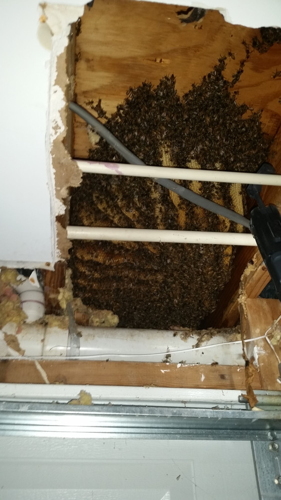 Westminster bees!