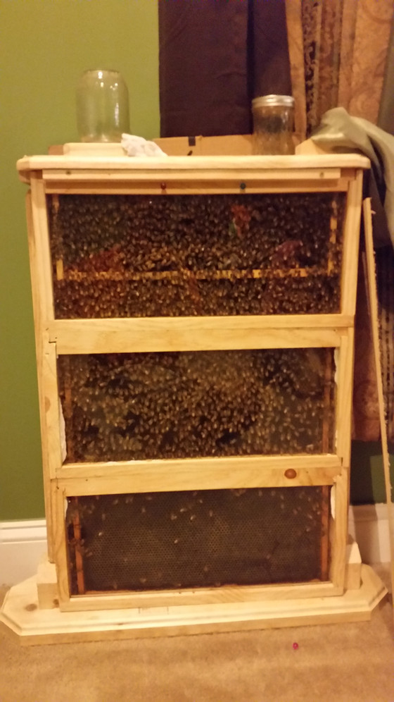 Cure the winter blues with an observation hive!