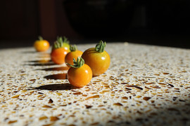 Dansing Tomatoes