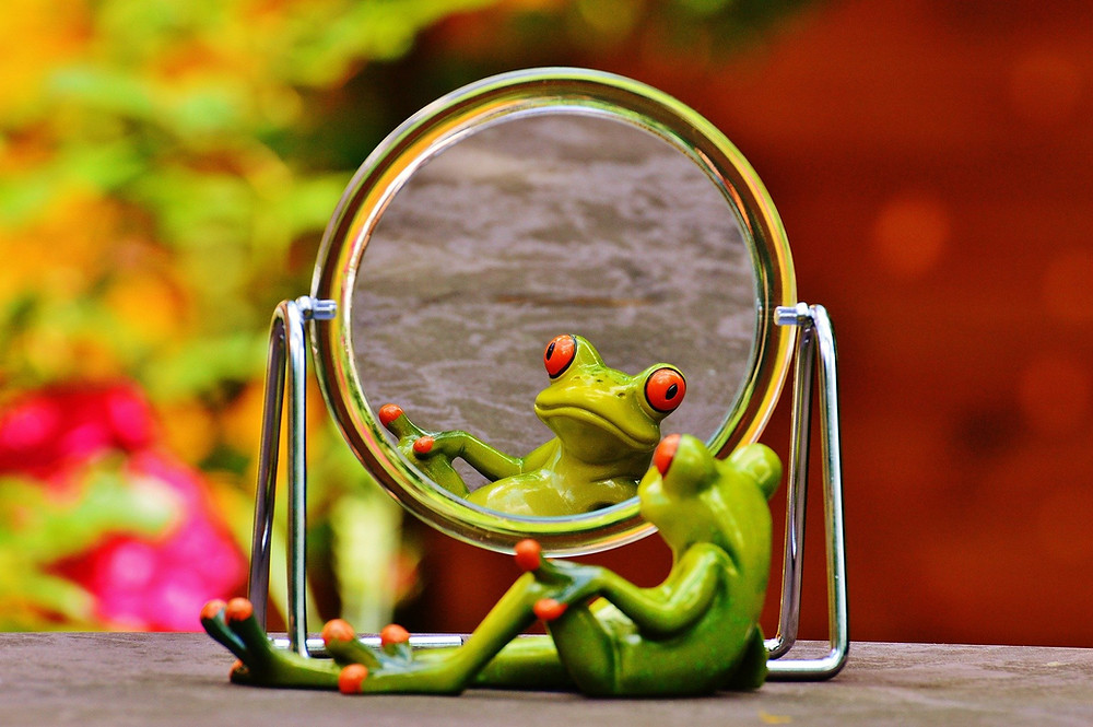 Frog laying down in the mirror