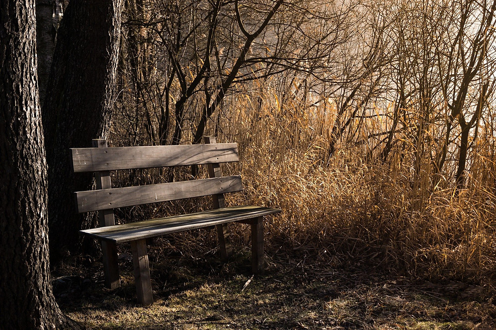 bench during fall season with warm glow