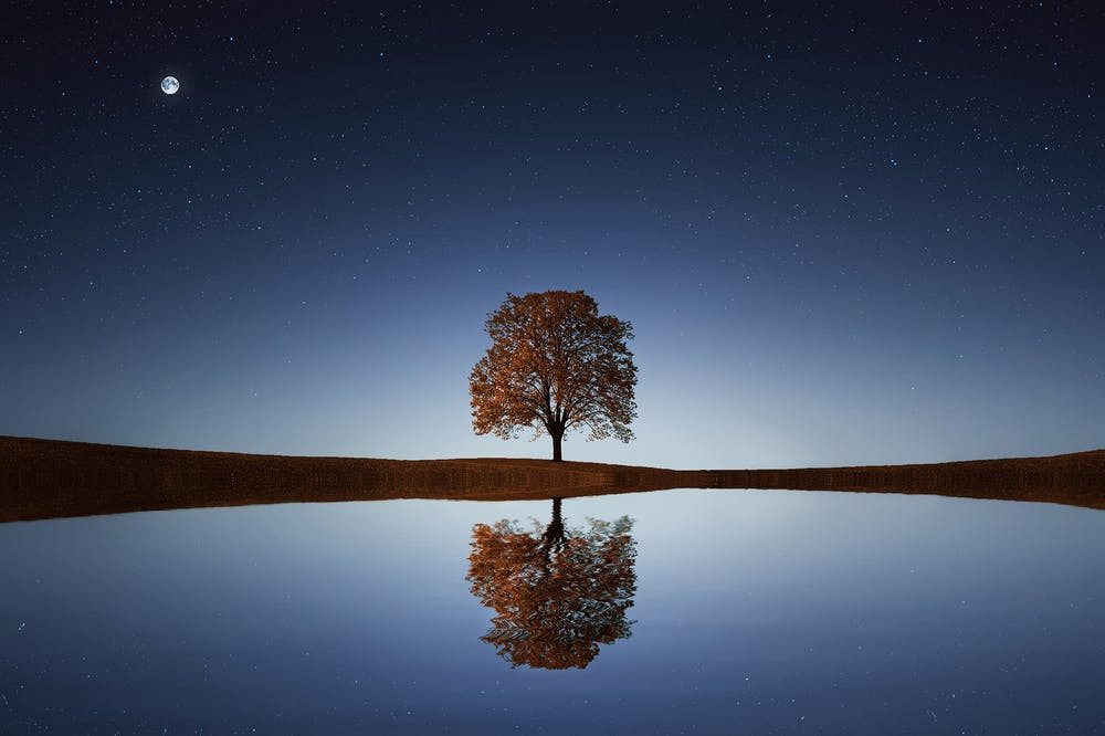 Lone tree by lake reflecting the tree and night sky