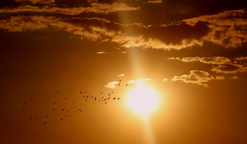 Sunset of orange sky with flock of birds crossing