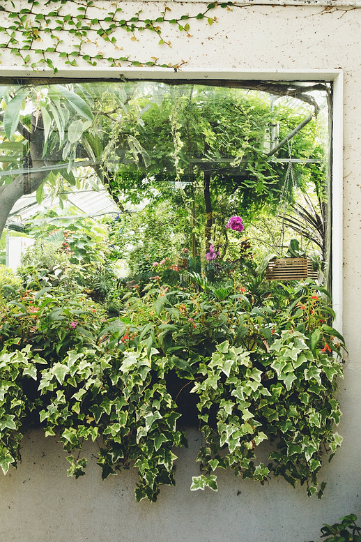indoor-garden-with-ivy-on-sill_4460x4460
