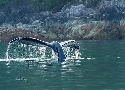 Humpack whale tail