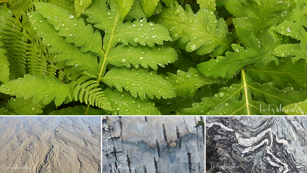 Patterns in Nature for Inspiration
