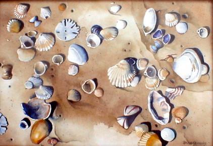 W. Africa Sea Shells
