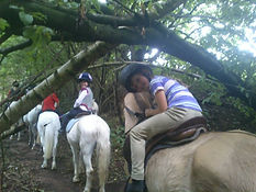 horse riding lessons penrith cumbria