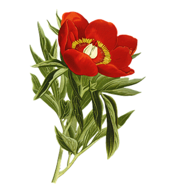 flower-5472351__340_edited.png