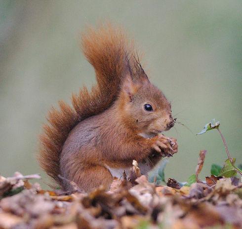 Squirrel_edited.jpg
