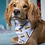 Thumbnail: Spot Dogs