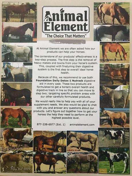 animal element