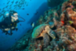 about us - discover koh tao.jpg