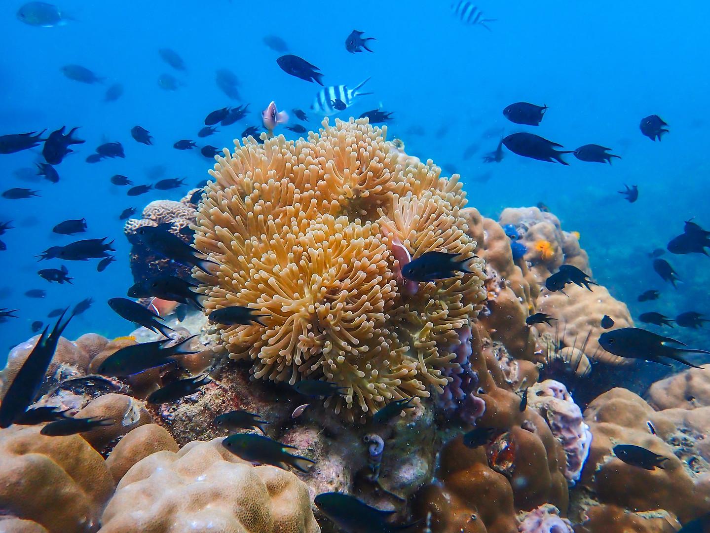 corals.JPG