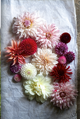 DAHLIAS%20SPREAD_edited_edited.png