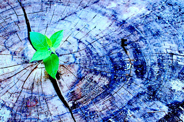 Healing Cycles of Harm
