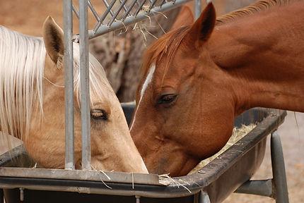 horse-feed-4.jpg