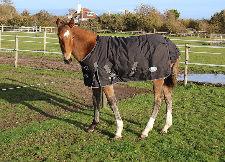 Rhinegold 'Konig' Small Pony/Foal Outdoor Rug