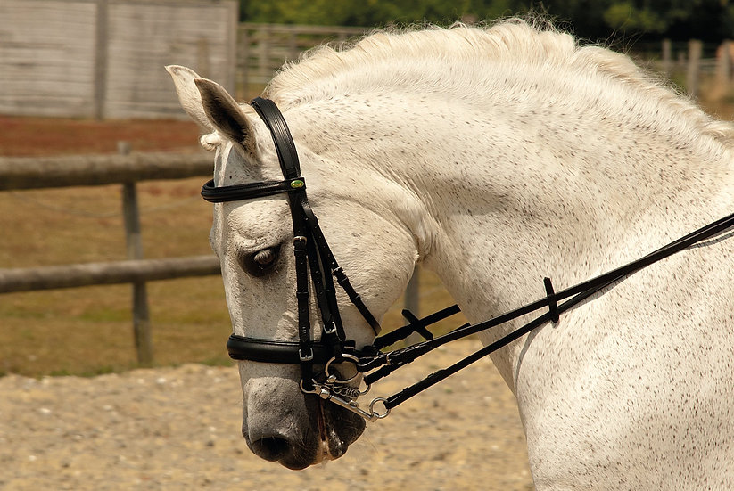 Rhinegold German Leather Comfort Double Bridle