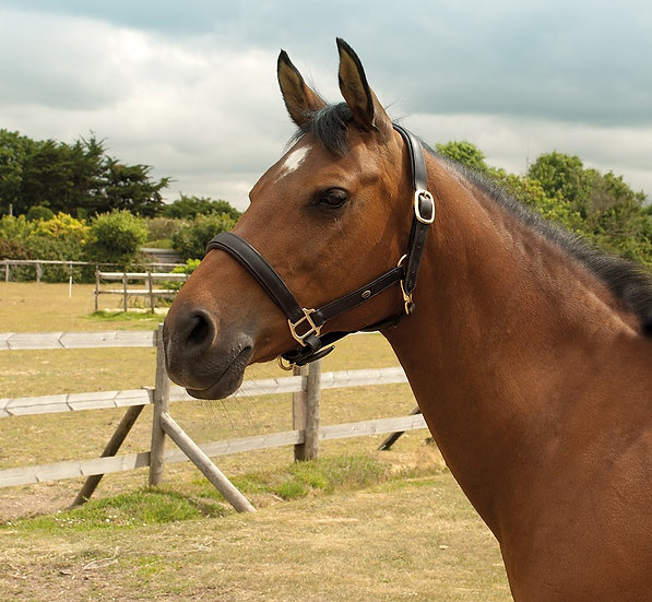 Heritage English Leather Padded Headcollar