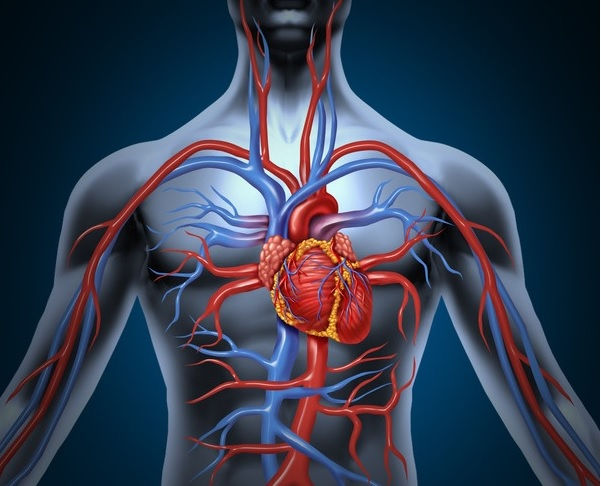 Vascular Periférico - Consulta Médica
