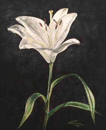Lilium candidum (Acrylic, 2020)