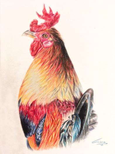 Dutch Rooster (Colour Pencil, 2021)