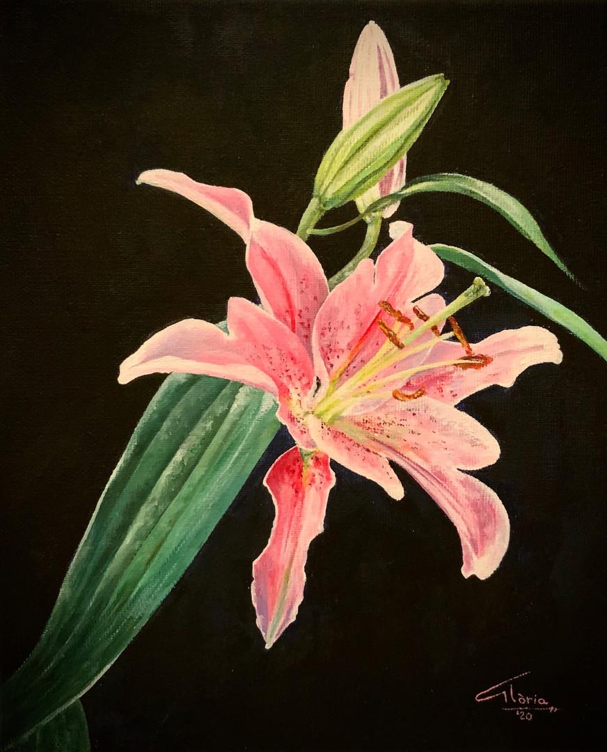 Lilium Rosea. (Acrylic, 2020)