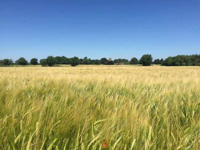 crop field