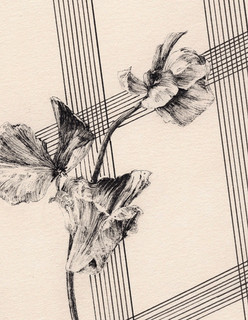 fiona's composition