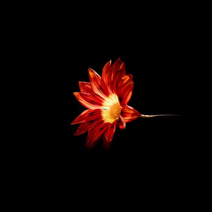 Flower 20191027 13.jpg