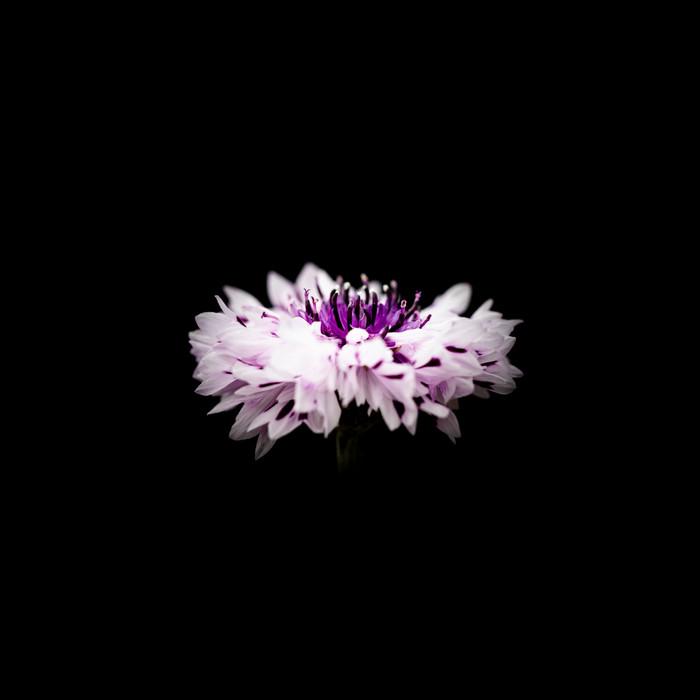 Flower 20191027 10.jpg