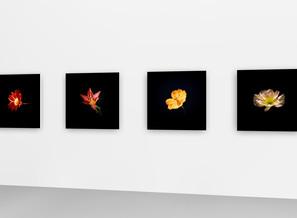Flowers for Basel