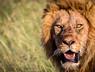 On Safari in the Masaii Mara